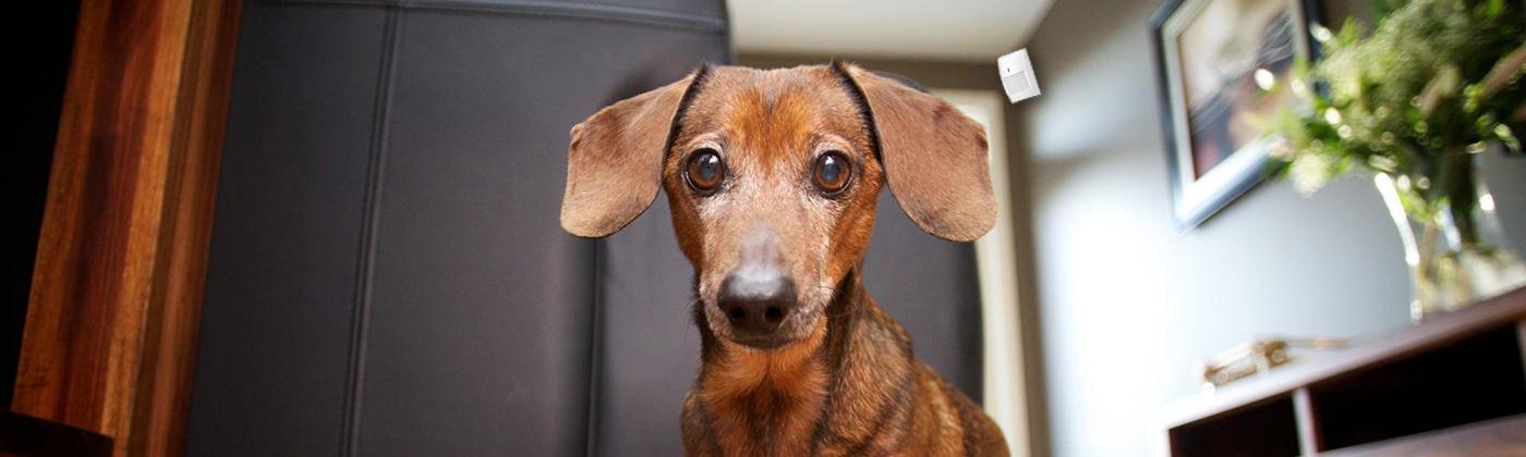 alarmsysteem voor huisdieren